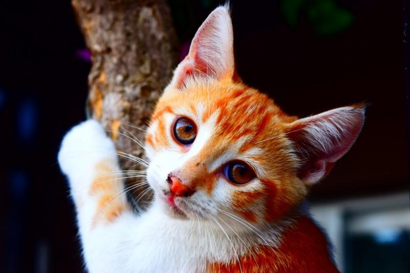 cat-animal-nature-young-cat